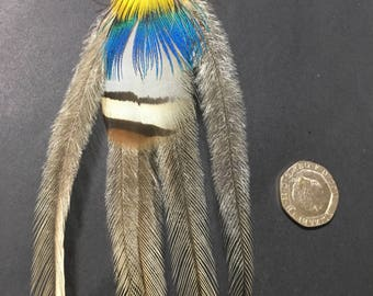 Single feather earring on silver wire