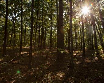 Woodsy Sunrise Digital, Forest Photography, Nature Photography,