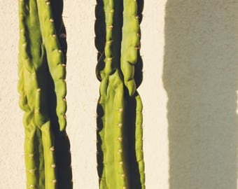 Two Cacti print