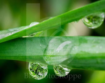 Grass in Grass | Macro Photo Art | Nature Lover Gift | Fine Art Photography | Personalization | BDPhotoShoppe | Home Office Decor