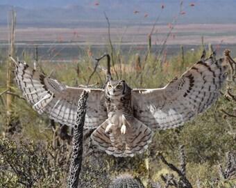 Great Horned Owl Prints, Great Horned Owl Photography, Owl Prints, Owl Wall Art, Owl Fine Art, Owl Wall Decor, Owl Decor, Owl Art