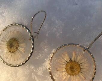 Bubbles daisies earrings