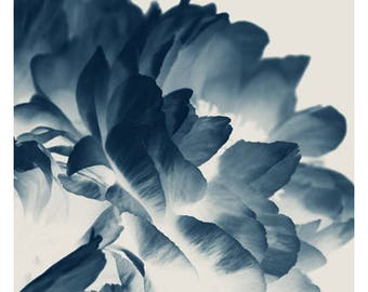 Flower Photograph - Peony Print - Floral Print - Botanical Photograph - Blue Paeonia #3 - Fine Art Photograph - Cyanotype - Wall Art - Blue
