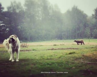 White Dog in Fog