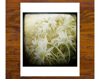 8x8 print [JCP-517] - Flannel Flowers