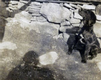vintage photo 1930 Abstract Dog and His Shadow Tricks unusual