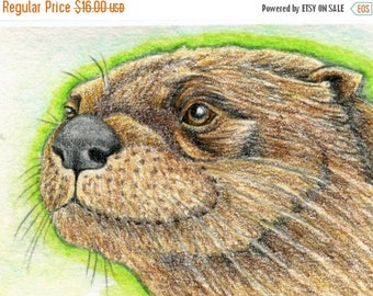 Dog Days of Summer ACEO ATC  Drawing Original Otter Wildlife Art-Carla Smale