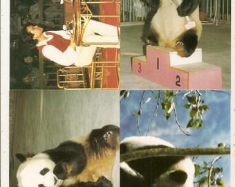 43 DIFF POSTCARDS China Pandas,Buildings, Scenes ETC....