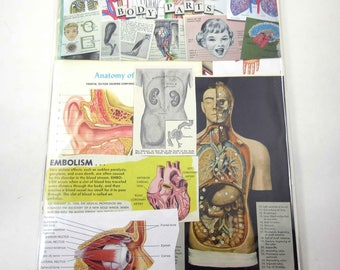 Anatomy or Body Parts Vintage Ephemera Pack of 65 Pieces for Altered Art