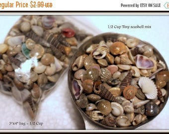 Save25% Sea shells in a 3x4 bag-3 oz of shells-Medium polished shells for terrariums-Vivariums-Weddings-Craft Projects and More