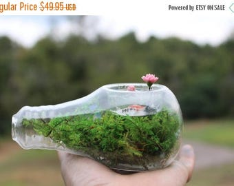 Save25% Light bulb terrarium-Koi & water lily pond-Preserved moss NO water needed-Pink water lily