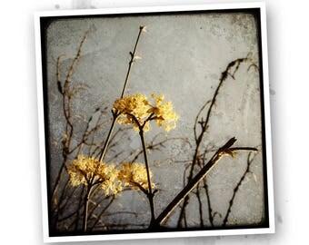 Melancholy - Nature - Flowers photo art signed 20x20cm