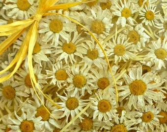 12 Small White Daisies, Dried Flowers, Wedding Confetti, Craft Supplies, Resin Jewelry Flowers, Floral, Real Flowers, Decorations, Decor