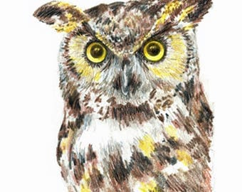 5 x 7 inch Great Horned Owl Original Hand Drawn Colored Pencil Sketch