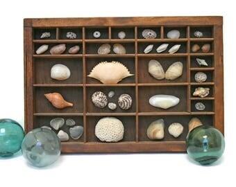 Vintage Specimen Box  /  Printers Tray  /  Sea Shell Collection  /  Beach Cottage Decor  /  Shadow Box with Seashells