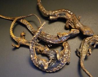 Dried Preserved Real Lizards OOAK Deviant Art Oddities