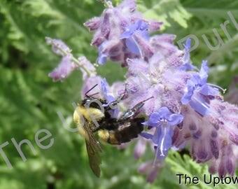 Bee on a Purple Flower Photo Print