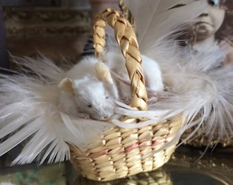 Meet Feather The Taxidermy Sleeping Mouse