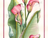 "Watercolor Print ""Calla Lily"" by Sandi McGuire"