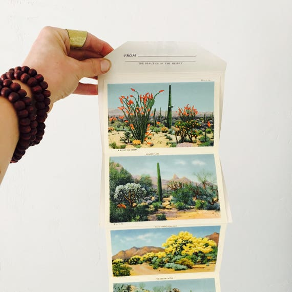 Vintage Cactus Postcards Desert Landscape Southwest Souvenir Folder Vintage Desert Botanicals  Lithos Prints