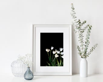 tulip print, Flower Photography, Tulip Photo, wall art, floral print, flower print, flower photo, botanical art print, white tulips vertical