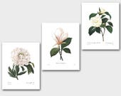 Botanical Print Set SALE (White Room Decor, White Flower Art, White Nursery Decor, White Wall Art) Redoute Set of 3 Prints