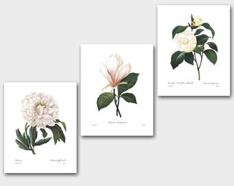 Botanical Print Set (White Room Decor, White Flower Art, White Nursery Decor, White Wall Art) Redoute Set of 3 Prints SALE