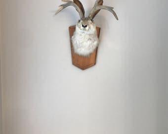jackalope jackrabbit antelope bunny rabbit wolpertinger plush