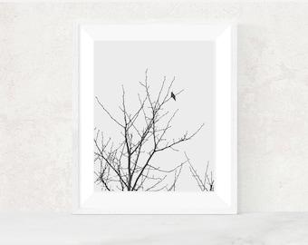 Digital download | SLOW WINTER | Minimalist art | country decor | modern minimalist bird photo | printable wall art | nursery art print