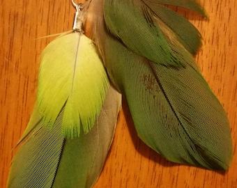 Amazon Parrot Feather Earrings