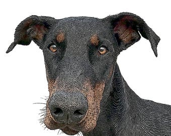"Set of 4 cards 4.25"" x 5.5"" with envelopes - Doberman in Black and White or in color"