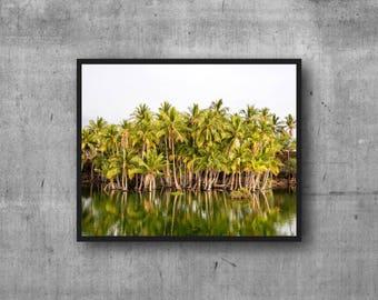 Palm Tree Oasis - Island Time - Hawaii Photo - Tropical Art - Photography Print photo