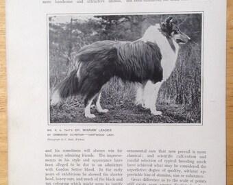 COLLIE SHEEPDOG Antique Dog lithograph print 1907 Robert Leighton show dogs Cassells Co London Christmas Thanksgiving Birthday present