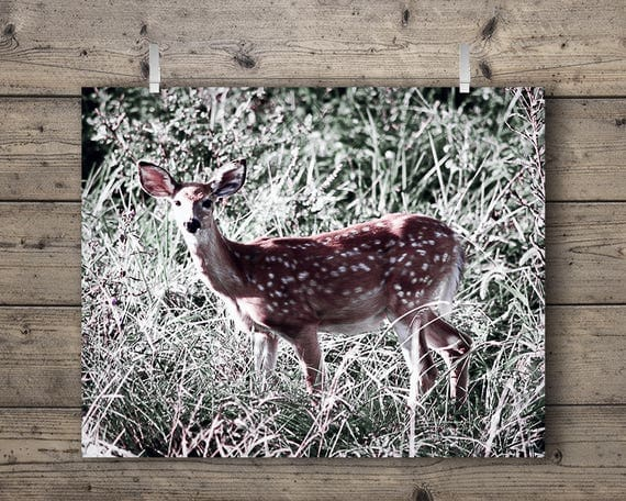 Deer In The Meadow / Outdoors Wildlife Nature Photography Print / Woodland Animal Home Decor / Soft Wall Art