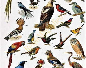 Birds of the world image digital download for art print, scrapbooking, mixed media, altered art,