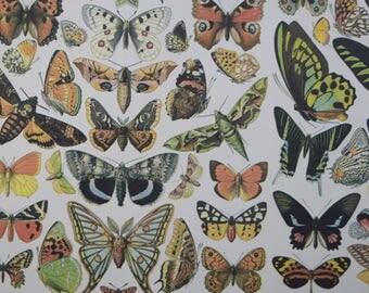 "Botanical Print Paper, Butterflies & Moths Design, Butterfly Paper, Wrapping Paper, Decoupage Crafts, Collage, Scrapbooking Paper 8.5"" x 11"""