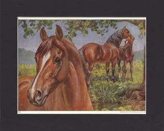 Morgan Horse Print 1923 By Edward Miner Print of Signed Painting Mounted with Mat - Morgan Print Vintage Morgan Print Bay Horse Print