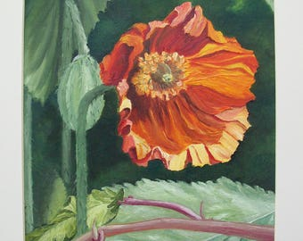 Caren Taylor ORIGINAL Mounted Oil Painting FREE SHIPPING! *Brash or Shy Poppy* Oil painting on canvas board depicting my own garden flowers