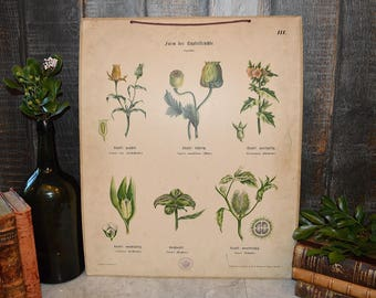 Antique German Botanical Wall Chart Educational Poster Yellow Florals