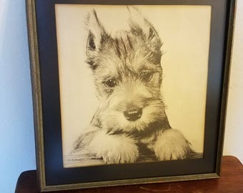 Vintage Well Done Framed Linen Black and White Photograph of a Schnauzer Puppy