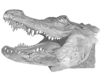 An original pencil drawing of a Crocodile