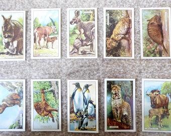 Gallaher Ltd Cigarette cards - Wild Animals - full set of 48 cards
