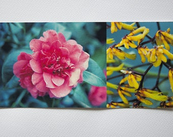 "yellow long ""nature"" Camellia and flowers card printed on cotton paper fine art"