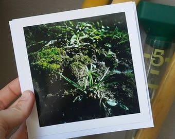 MOSS GARDEN, Photo Card, Blank Inside