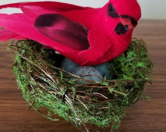 Natural Crafted Long Tail Cardinal birds nest with 3 Eggs.