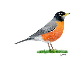 Bird artwork etsy american robin watercolor bird print robin bird art bird painting bird illustration sciox Gallery
