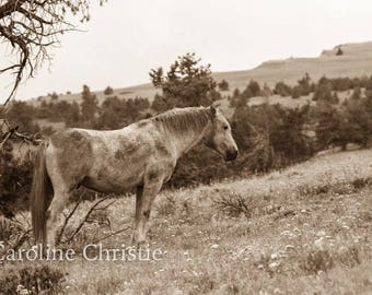 "Horse print,Wild Horse Photo from The Pryor Mountains in Montana. Horse Photograph. Title: ""Cloud"""
