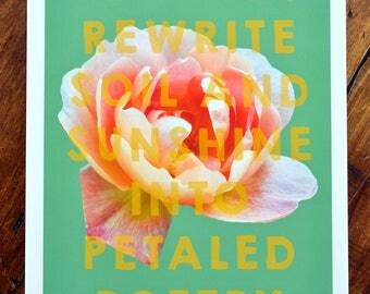 Floral art print - 'Guillemets Rose'