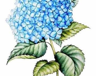 Flower Watercolor Painting - Floral Art Print - Watercolor Flower Watercolor Painting Flower Painting Floral Art Hydrangeas