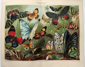 Butterflies II - Original 1907 Chromo-Lithograph by Meyers.